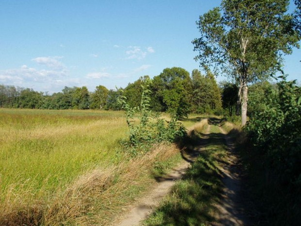 Bussero, percorso agricolo con fascia di vegetazione